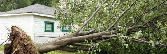 Trees Can Damage Roofs